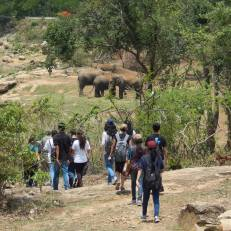 Interns spent the day at the Bannerghatta National Park and went on a Nature Walk